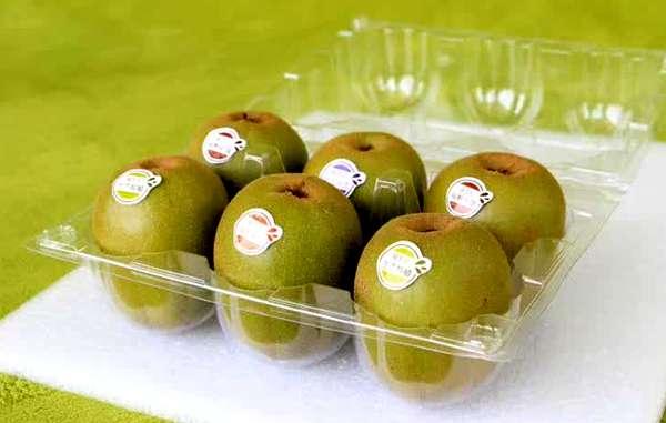 贵州六盘水猕猴桃即将迎来采摘上市