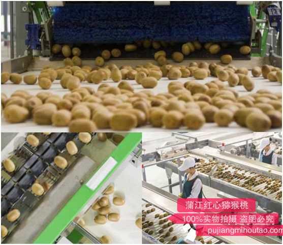 借助信息技术 蒲江打造顶级猕猴桃工程中心