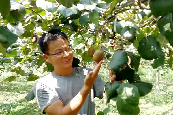 猕猴桃杨刚科技工作者
