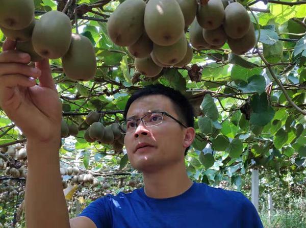 猕猴桃杨刚专家