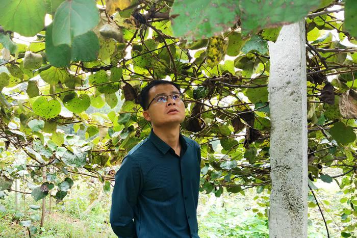 猕猴桃杨刚