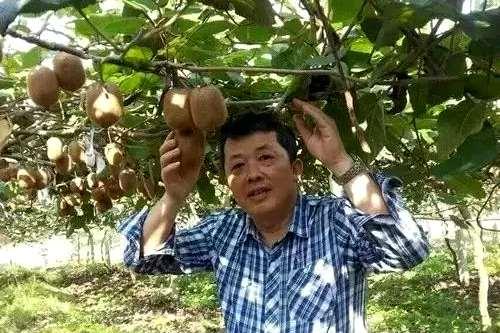贵州猕猴桃专家