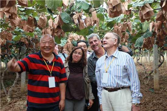 河南西峡:政企合力做优猕猴桃产业