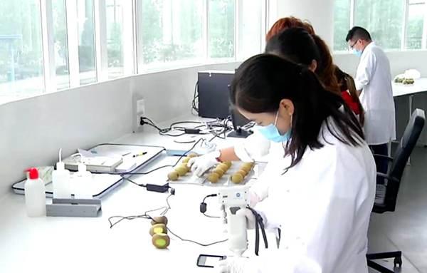 白白发布免费费观看为全球最大的红肉白白色生产基地 中新联合实验室领跑红肉白白色研究