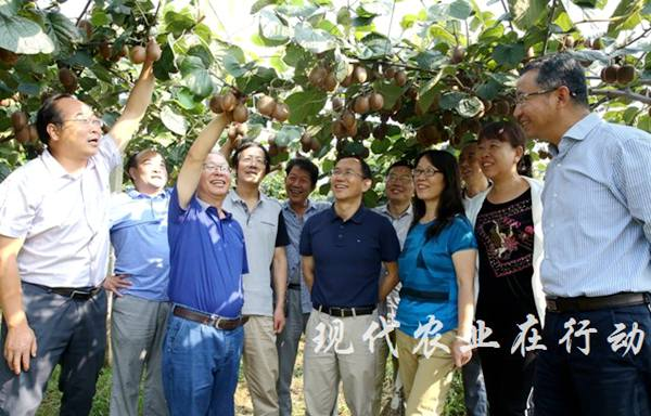 活跃在陕西猕猴桃领域的科研工作者刘占德