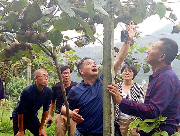 新西兰猕猴桃专家吴金虎博士专访实录