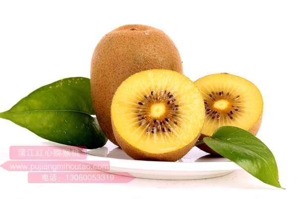 奇異果:學成歸來的獼猴桃