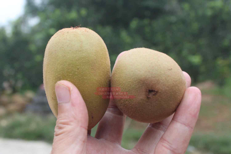 红华猕猴桃