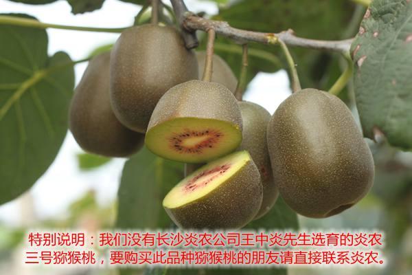 湖南长沙炎农生物科技有限分司王中炎