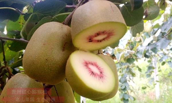 重庆猕猴桃