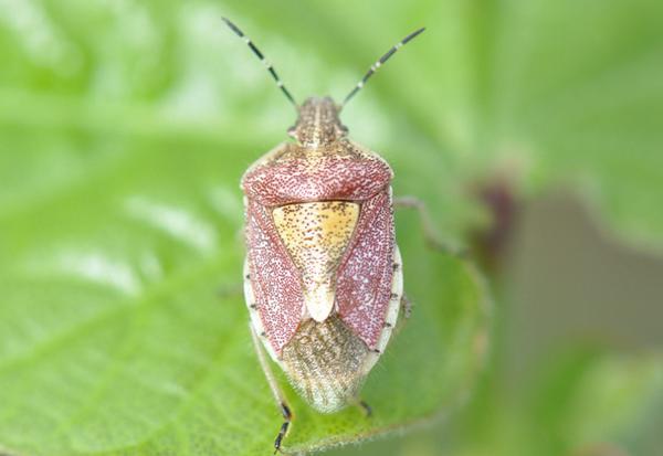 猕猴桃十大虫害,高清图谱+防治方法!