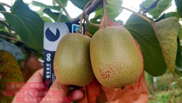东红猕猴桃多少钱一斤批发价格