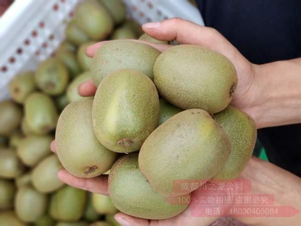 贵州遵义东红猕猴桃团购多少钱一件