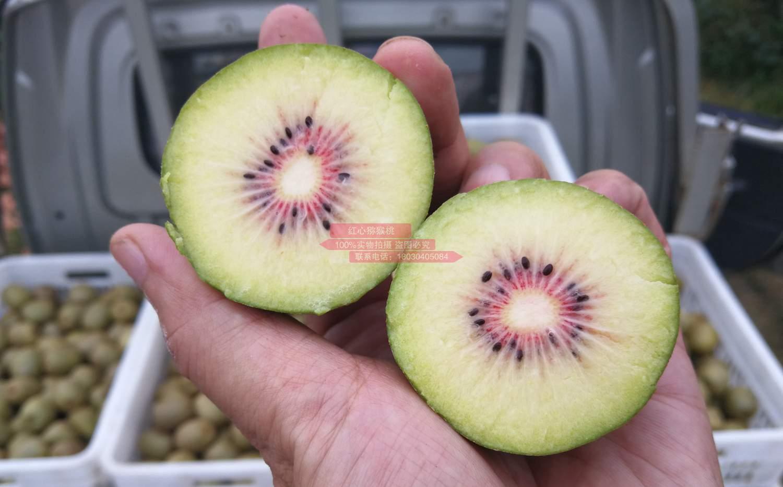 贵州也适合种植红心猕猴桃吗?