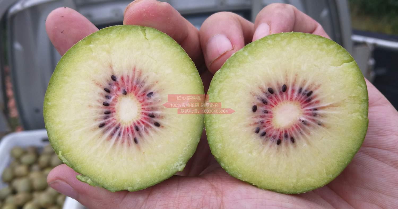 东红猕猴桃