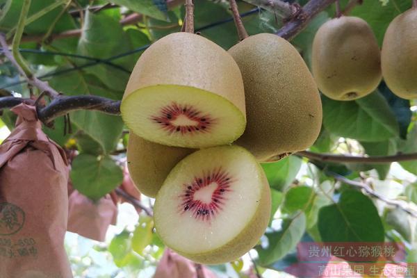 红心猕猴桃(奇异果)含有极高的营养价值
