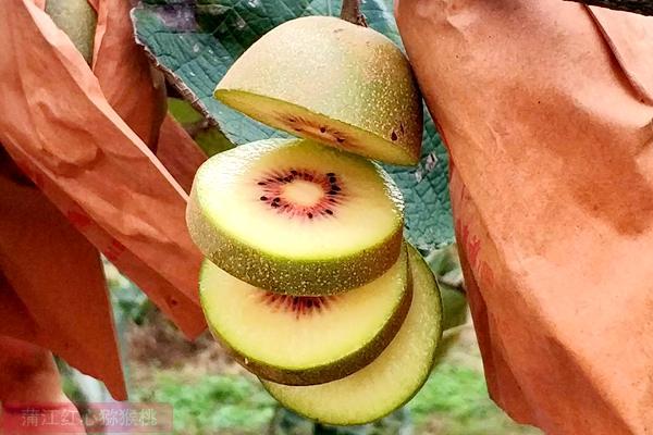 红心猕猴桃