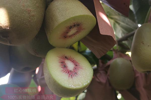 有机东红猕猴桃