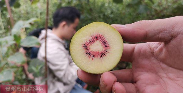 红心猕猴桃价格