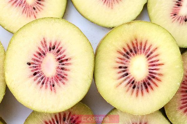 安徽六安金寨千亩红心猕猴桃产业 明年进入盛果期