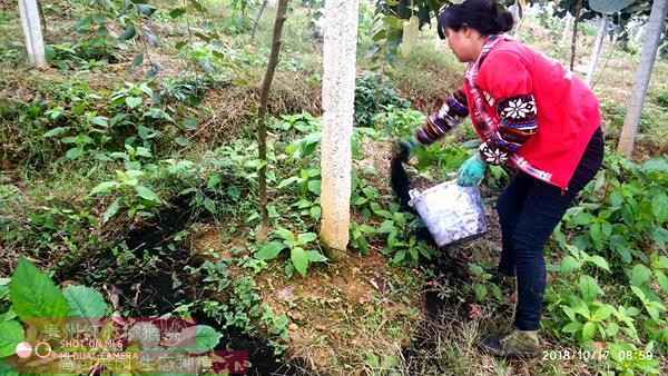 猕猴桃施用有机肥