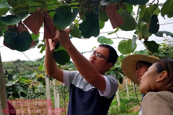 贵州有机猕猴桃