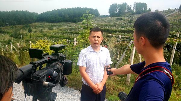 贵州遵义三岔镇高山猕猴桃