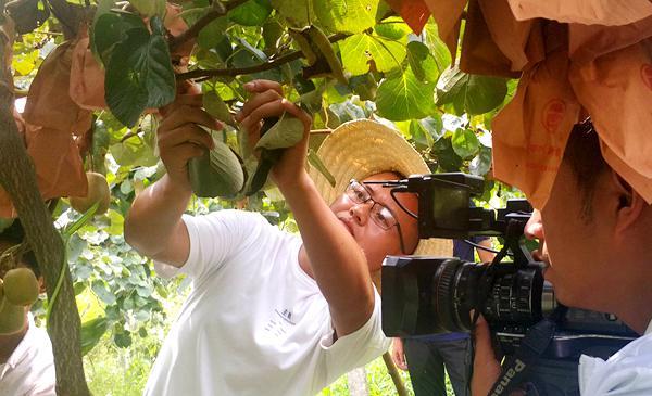 贵州遵义播宏有机猕猴桃