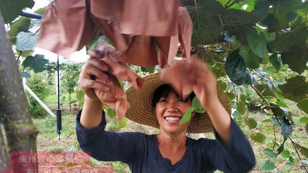 福建建瓯创业青年的红心猕猴桃种植基地