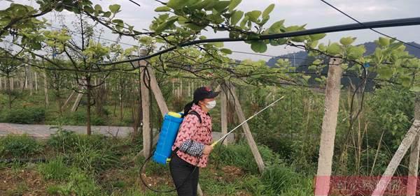 猕猴桃植物生长调节剂照片