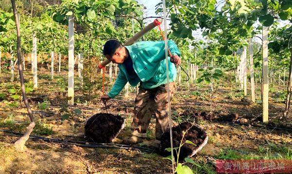 贵州六盘水市科技特派员为农户们讲解猕猴桃春夏栽培管理技术要点