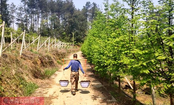 猕猴桃果实膨大期施肥方案
