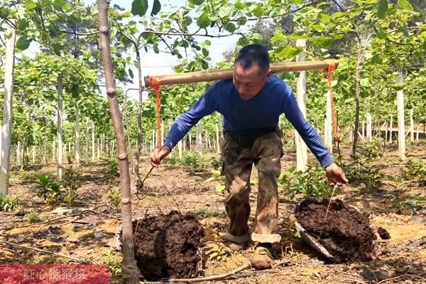 中科院专家调研湖北咸宁猕猴桃产业   建议大面积猕猴桃种植前一定要经过试种