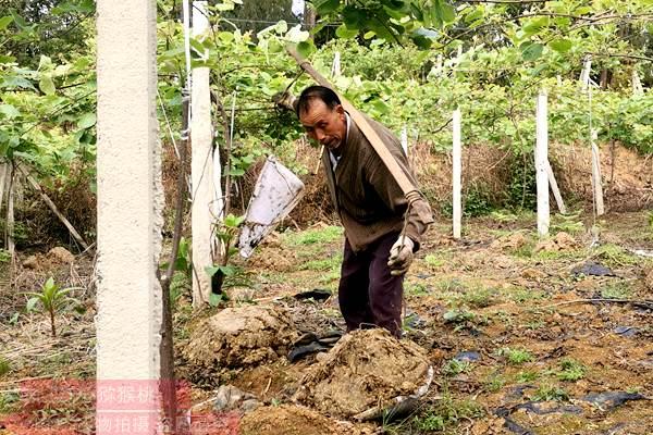 有机猕猴桃怎么种植