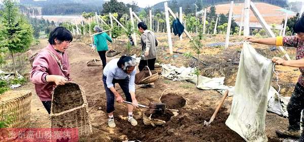 各种有机肥沤制与配肥施放技巧