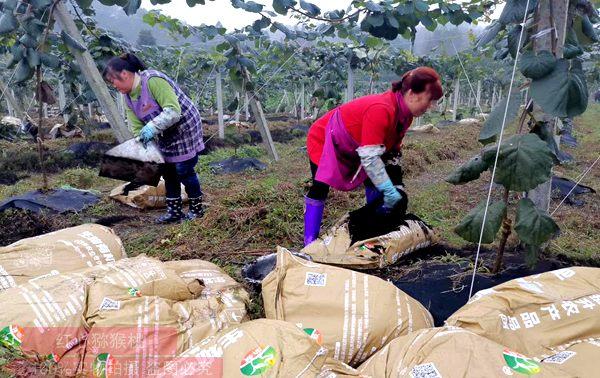 猕猴桃五月施肥有规矩 复合肥水溶肥有机肥结合使用