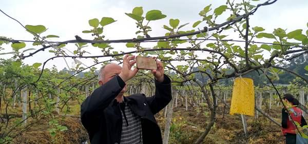 蒲江县猕猴桃协会发布《关于规范2018年度采摘时间和标准的通告》