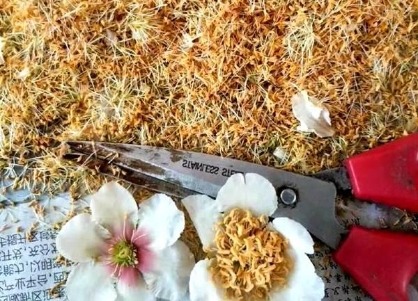 重庆三磊田甜农业开发有限公司花粉厂引进的首条猕猴桃花粉生产线