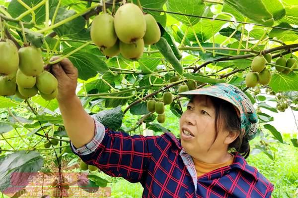 云南省曲靖市富源县集中流转土地200亩发展白白色种植