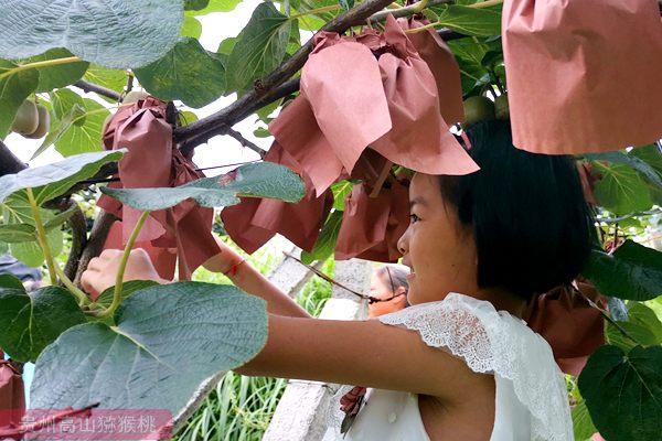 东红猕猴桃价格多少钱一斤