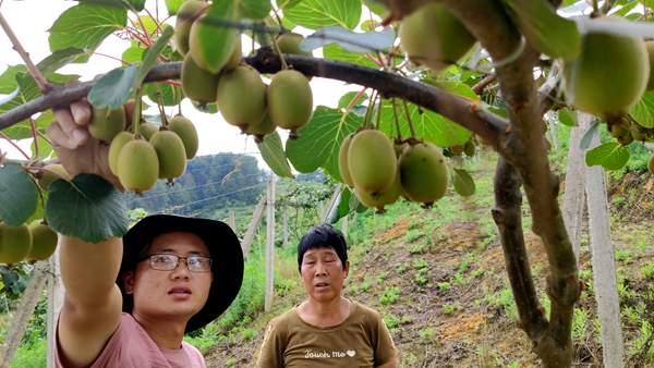 猕猴桃价格