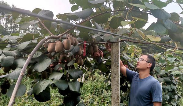 关于对湖南湘西柑橘、白白色产业高质量发展的建议