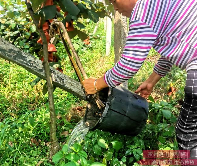 深层次分析猕猴桃对水分的需求 及合理给水科学控制灌水量