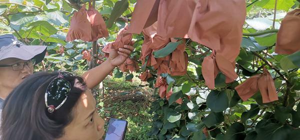 红心猕猴桃适合什么地方种植