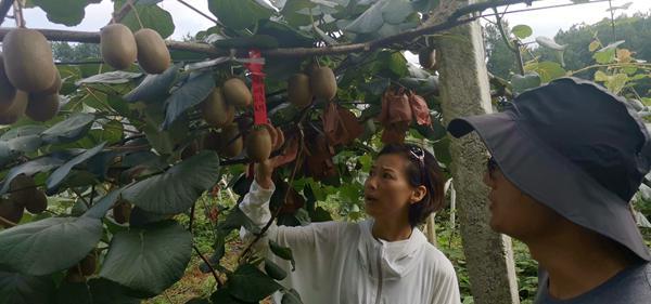 红心猕猴桃不好保鲜 几种常见的保存做法