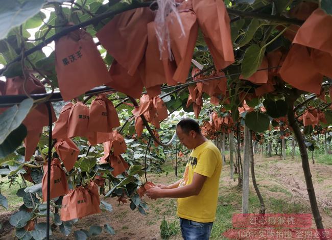 猕猴桃种植技术培训教学课程