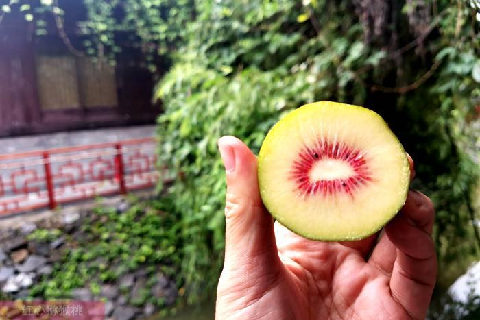 上海红心猕猴桃