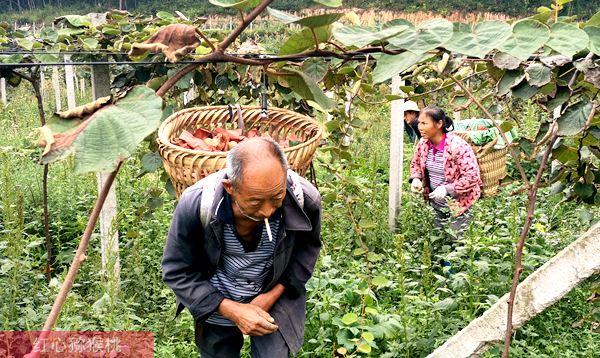 浙江宁波北仑小港湖芳村芳野瓜果研究开发有限公司种植有机猕猴桃采用自动化控制