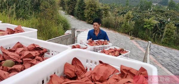 陕西传授猕猴桃的病虫害绿色防治关键技术要领
