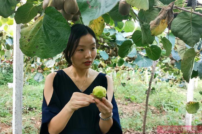 《中国猕猴桃产业发展报告(2020)》最新发布